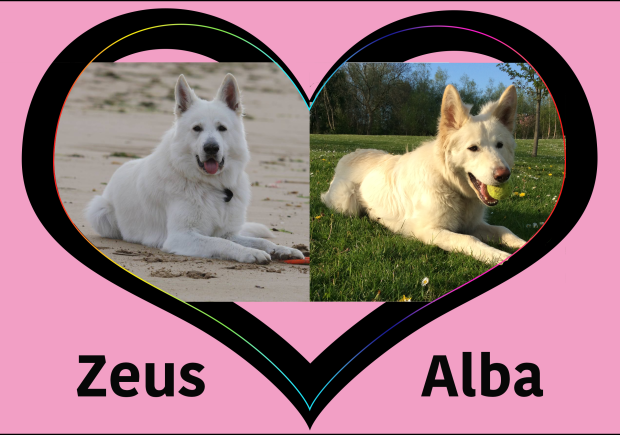 zeus&alba.png